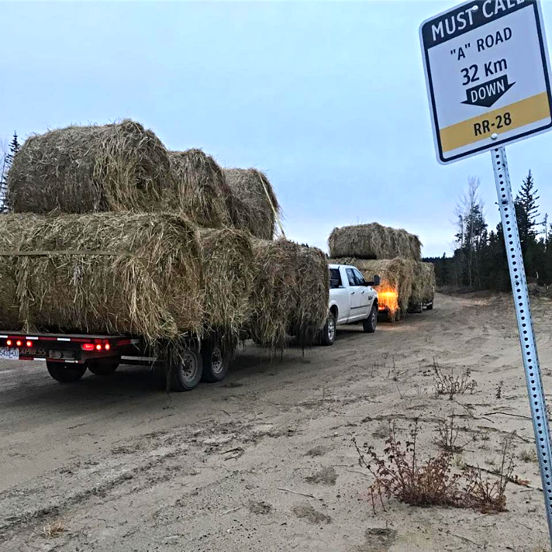 Haybales on the move!