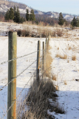 Miles and miles of pasture fence