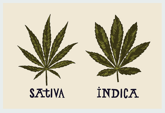 Tips to Help Your Differentiate Indica and Sativa