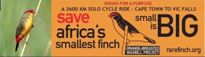 1 Mar: Eelco Meyjes: Saving the Orange-breasted Waxbill