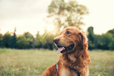 Qualities of a Good Dog Sitter in Vernon
