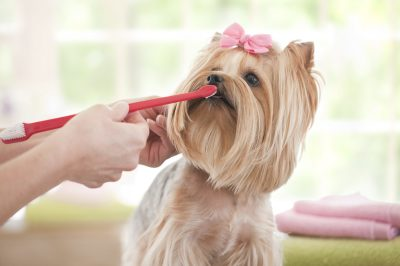 What One Needs To Know About Administering Pet Pill Pockets