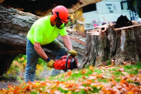 Benefits of Hiring a Tree Service Company