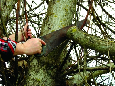 Questions You Should Ask When Hiring a Tree Company Louisville