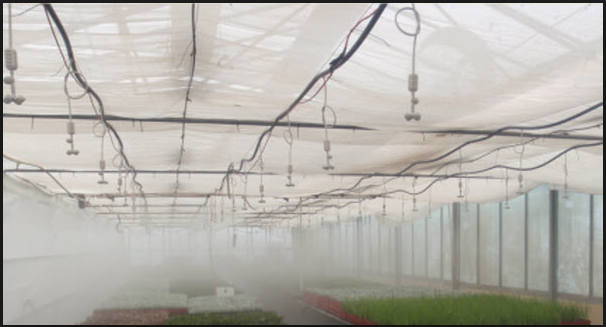 Tips To Help You Choose The Best Fog Misting Systems