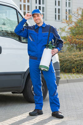 Mistakes to Avoid When Hiring New York Pest Control Companies