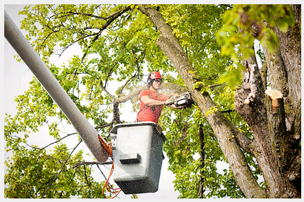 An Arborist in Time Saves your Trees
