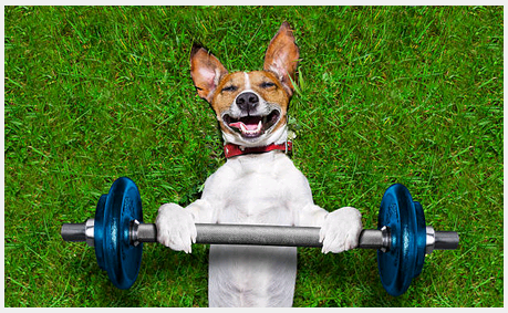 Reasons Why You Should Engage a Private Trainer for Your Dog