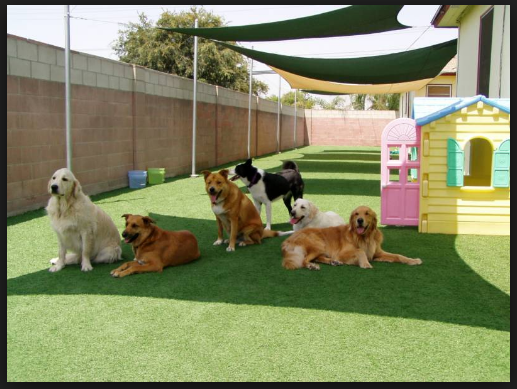 Why You Should Get Pet Daycare Services if You Have a Dog