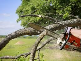 A Guide to Tree Services