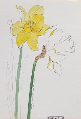 Daffodil prototype