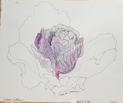 Purple Cabbage prototype