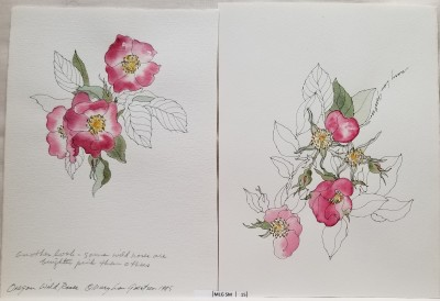 Wild Roses, set