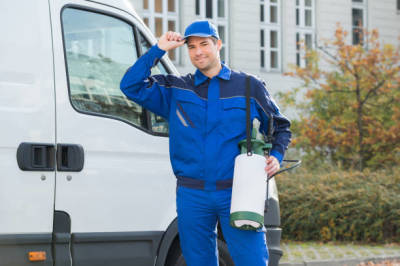 How to Choose the Best Pest Control Company