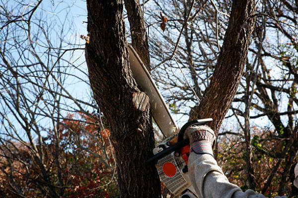 Tree Service: Your Best Remedy