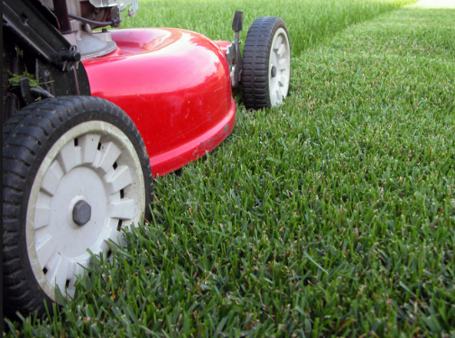 Benefits That You Can Obtain When You Hire Lawn Maintenance Services in Montclair