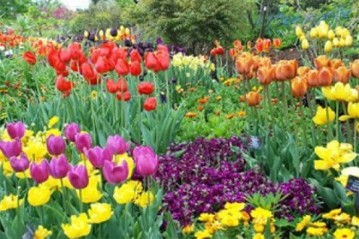 Roscoe Village Garden Walk images of flowers
