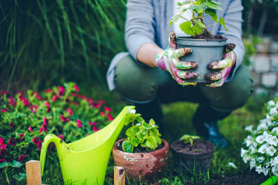 Lawn Care and Planting Tips