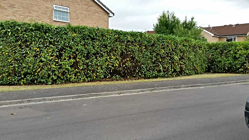 Completed Hedge Cutting Job