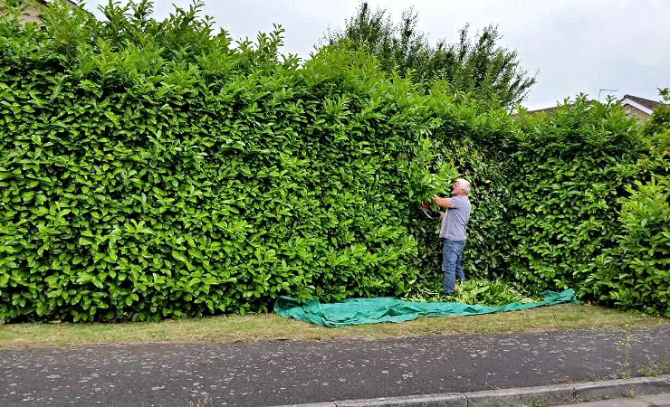 Commercial hedge cutting