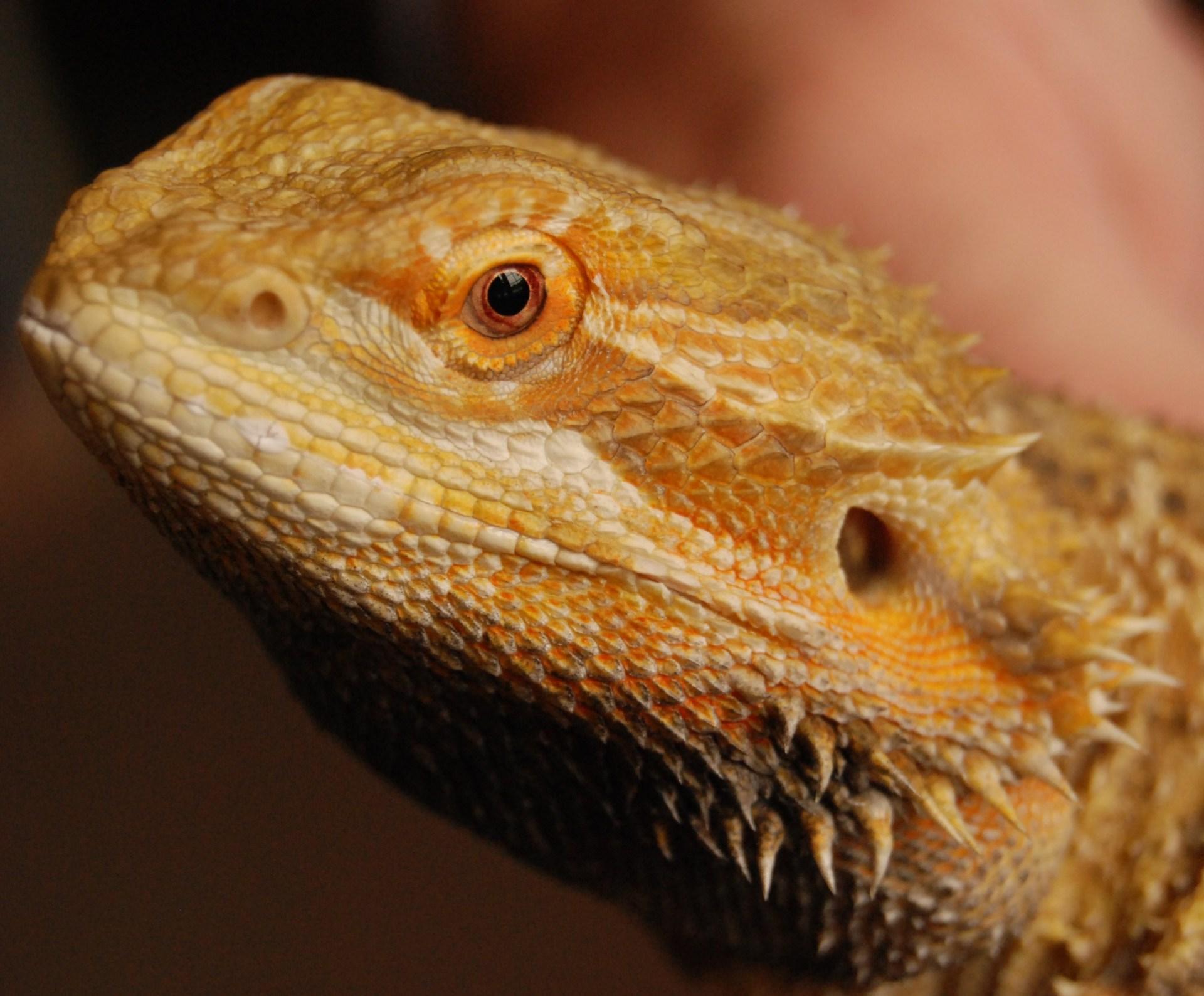 Lizard Care
