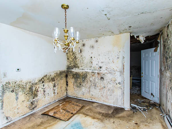Tips to Consider When Choosing Flooding Water Damage Service Company in New Orleans