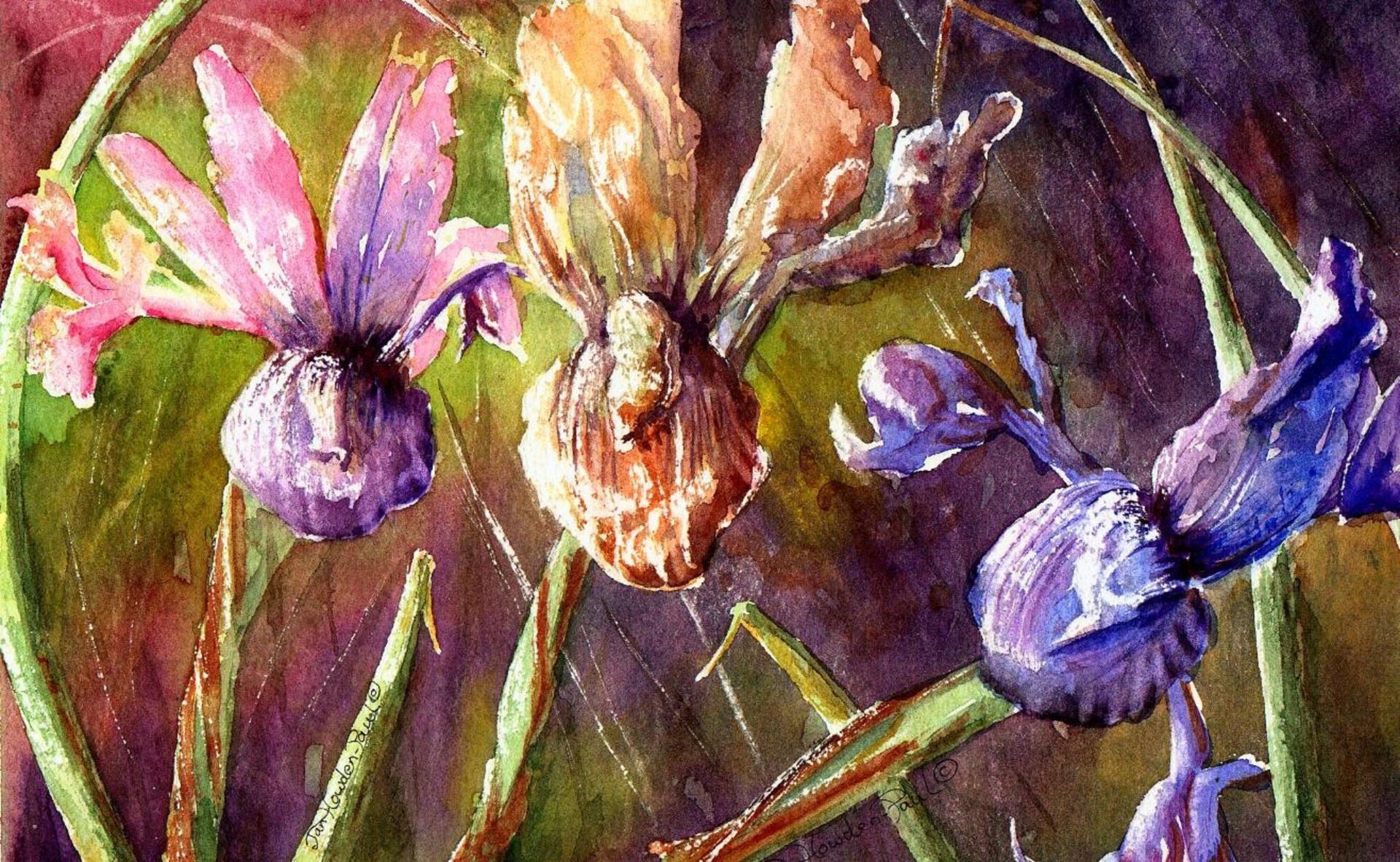 Irises In Color