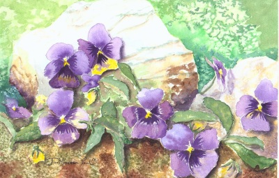 Pansy Haven