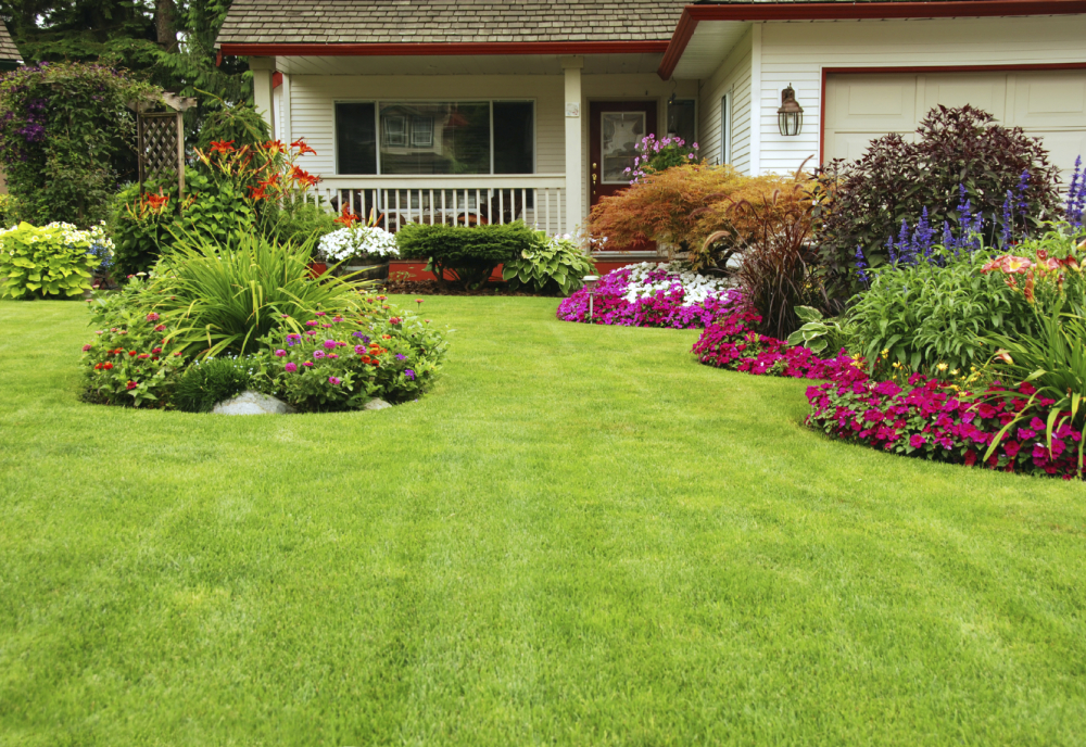 Things to Do to Avoid Weeds in Your Lawn