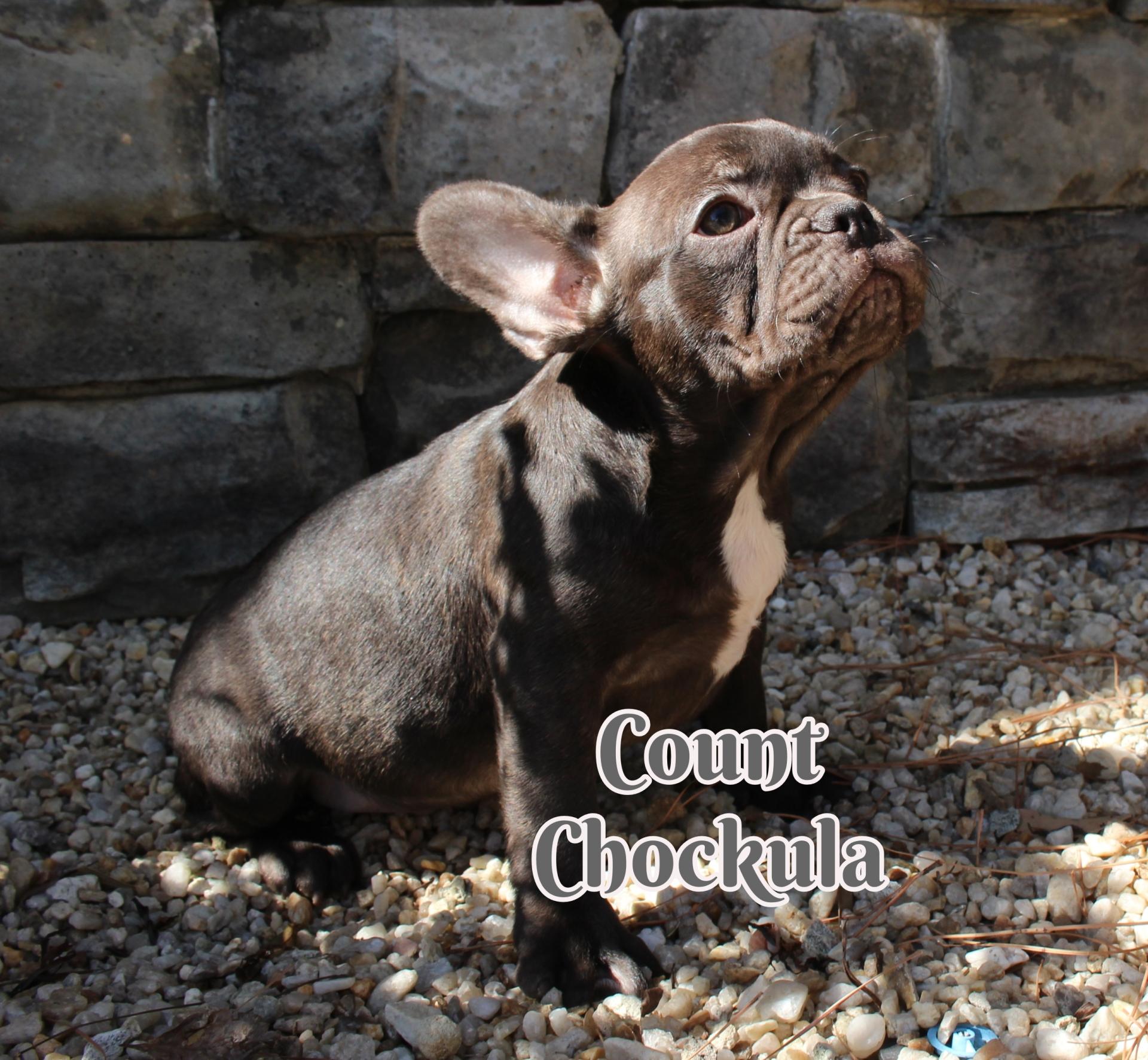 #FrenchBulldogPuppies #MerleFrenchBulldog #Frenchie #AvailablePuppies #AKCRegFrenchBulldog #SouthernTerritoryFrenchies #CountChockula