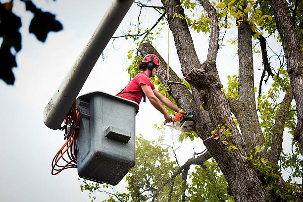 Why Hiring Tree Removal Services Is The Best Idea