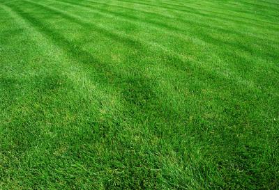 Lawn Care & More!