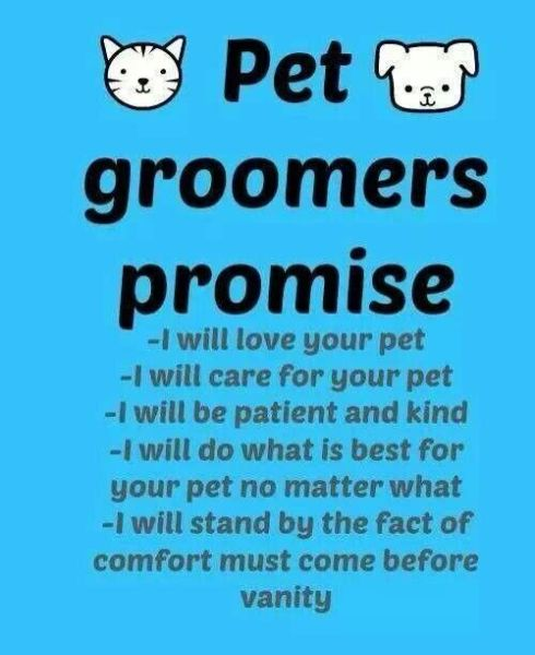 Dog grooming Quote