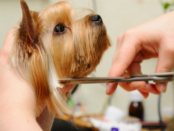 The 4 Greatest Dog Grooming Strategies