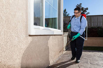 Learn More about Pest Control Frisco