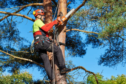 The Importance of an Arborist in Tree Pruning and Removal