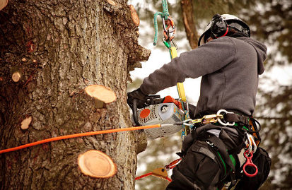 Tips on Choosing a Tree Service Company