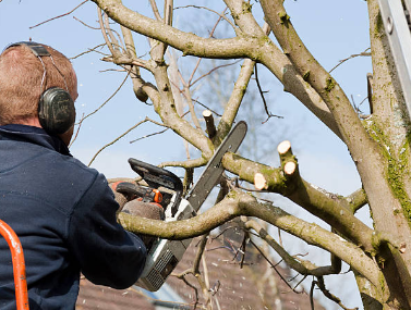 Clues of Selecting a Tree Pruning Service