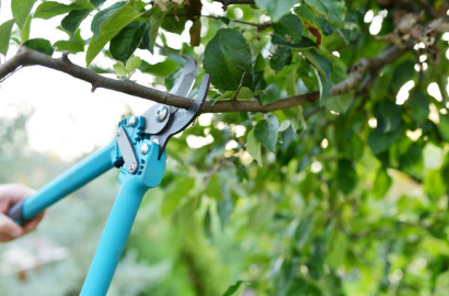 How to Select the Best Pruning Service Company