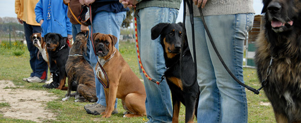 Things to Consider When Looking for the Best Dog Training Salt Lake City Services