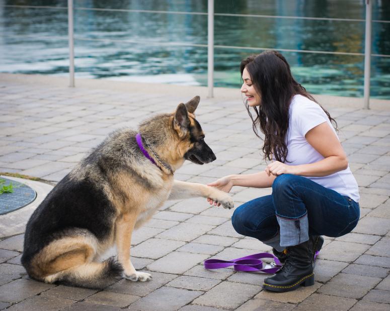 Picking the Finest Dog Training Collar