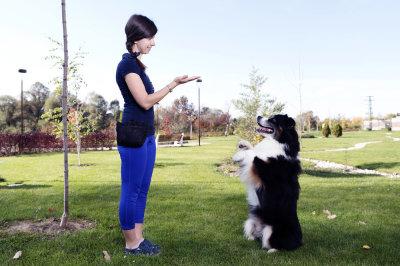 Training Your Dog: Essential Steps