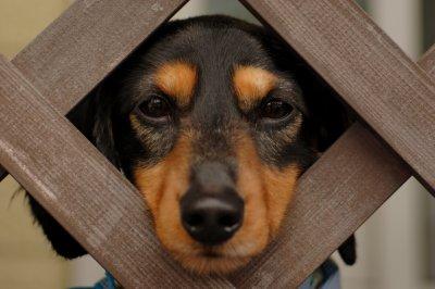 Dog Abandonment