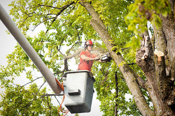 Getting a Better View on the Benefits of Tree Removal