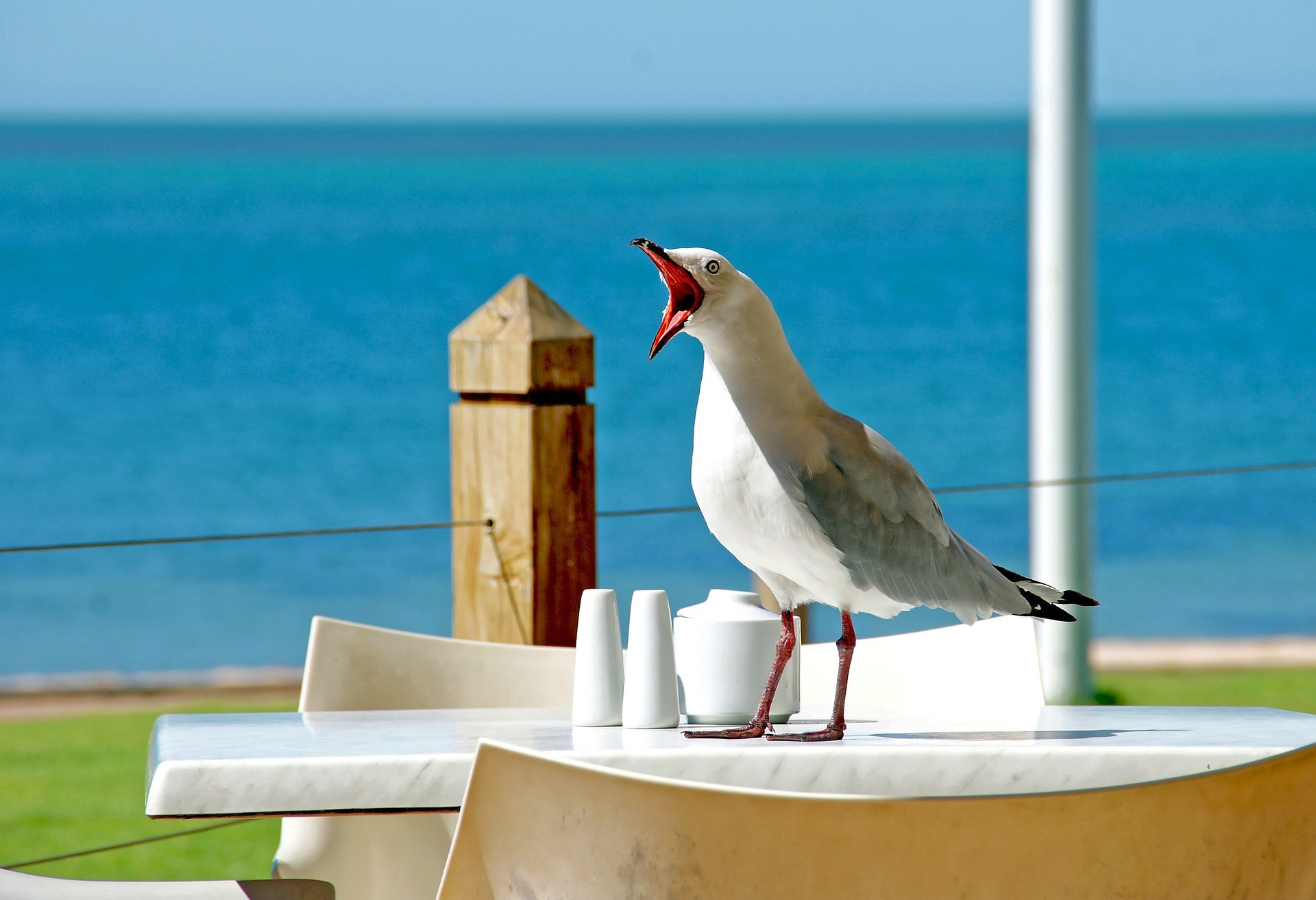 seagull-1159015_1920
