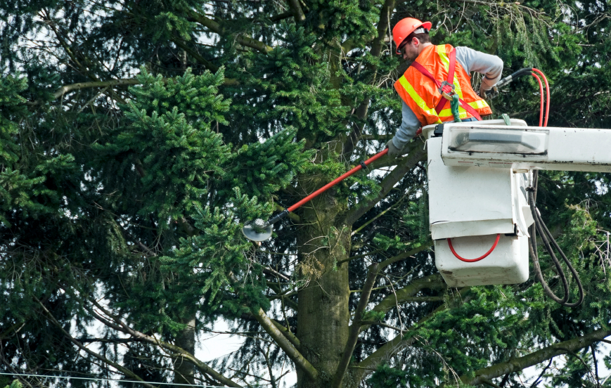 What A Tree Services Company Can Do For You
