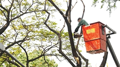 Factors to Consider when Hiring a Tree Pruning Professional