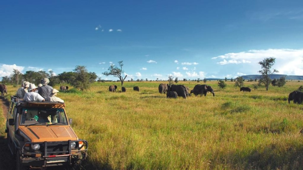 How to Have a Memorable Safari Tour