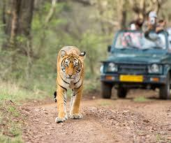 Interested in Safari Tours?