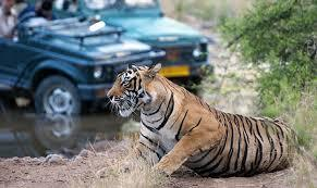 Finding the Perfect Safari Tours for You and Your Family